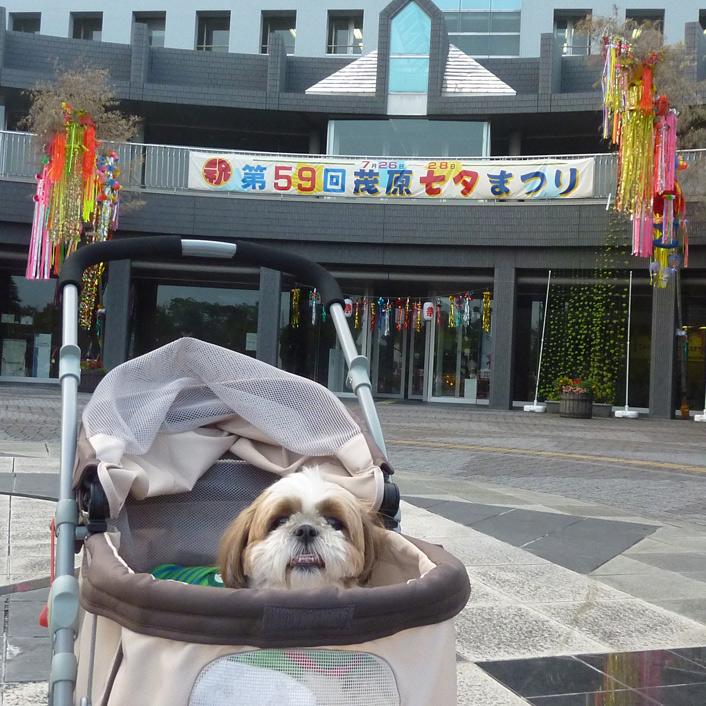 茂原七夕まつり2013
