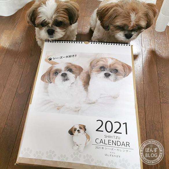 2021shihtzu_calendar_2