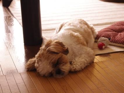 昼下がりのもふ寝