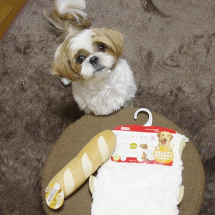 シーズー犬ぽんず、3歳の誕生日