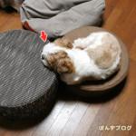 わんこ枕あるある。