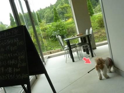 茂原すいらんドッグカフェ