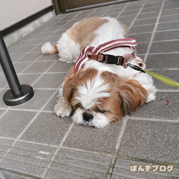 akifukasi