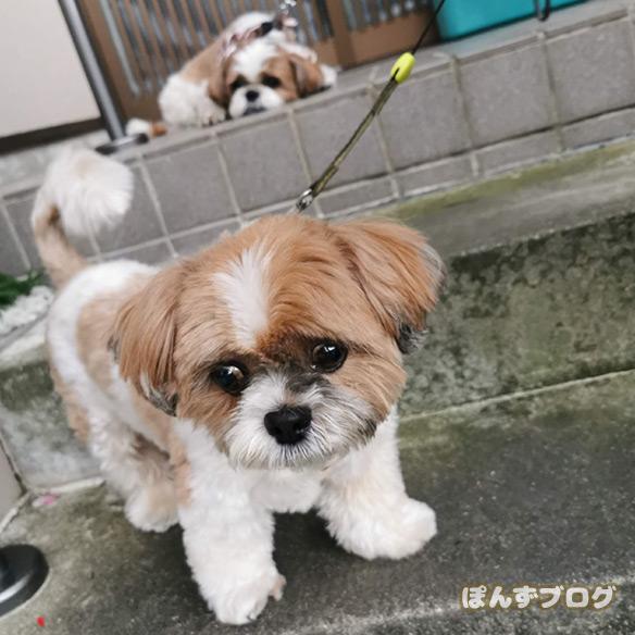 akifukasi2