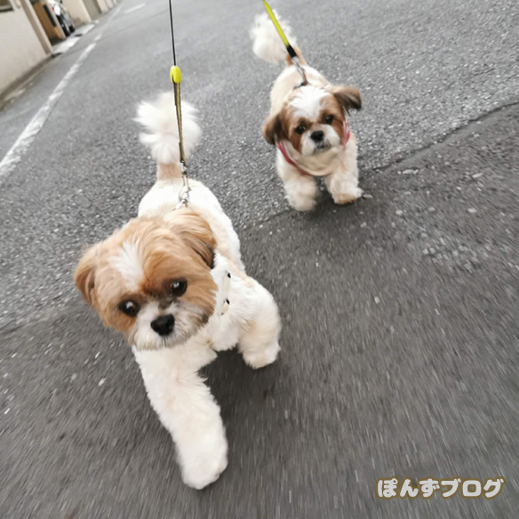 akifukasi4
