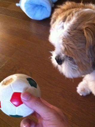 ボールのおもちゃ