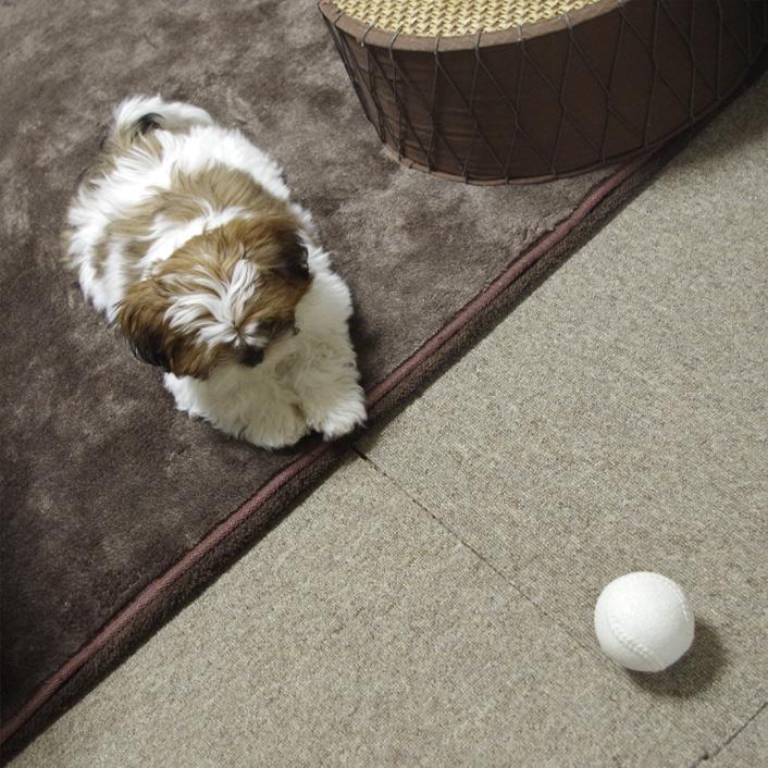 かぼすも、ボール大好き。