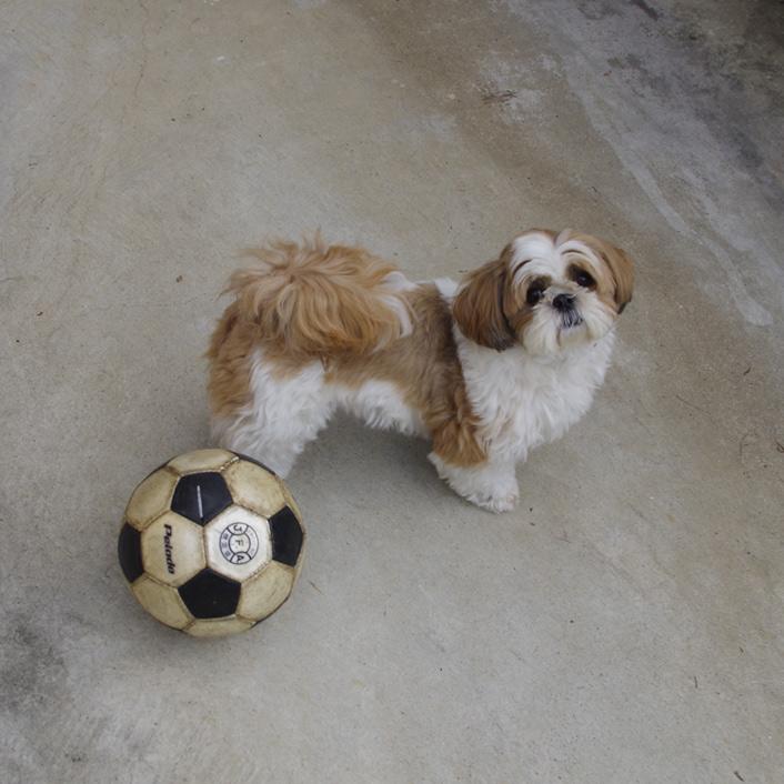 もふもふボール遊び