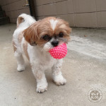 ちっちゃいボールは、好きかぼ。