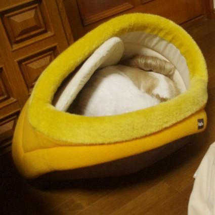 ベッドを破壊するシーズー犬ぽんず
