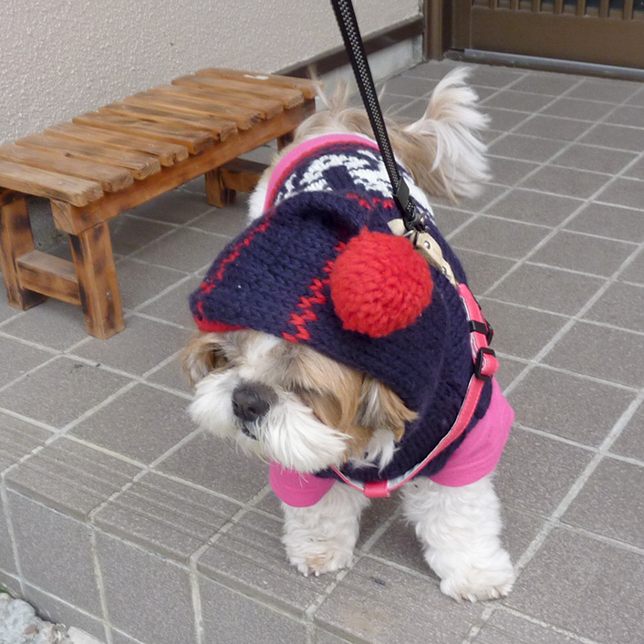 ボンボンフードで散歩です。