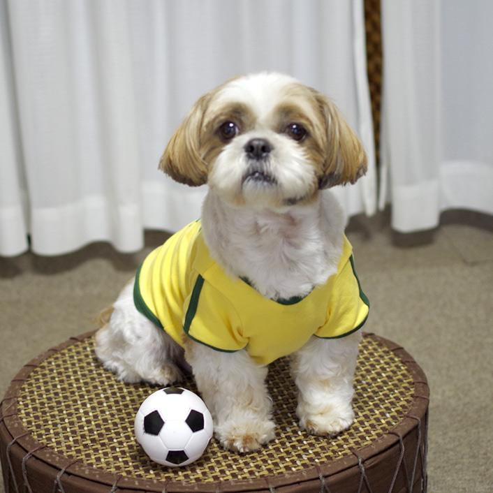 犬用サッカーユニフォーム《ブラジル・アルゼンチン代表》!