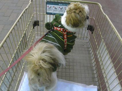 シーズー犬のぽんずと買い物