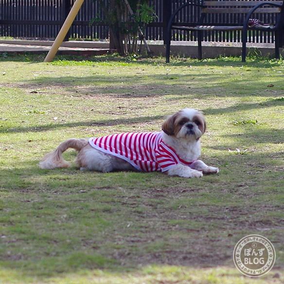 cainz_dogrun20181025_10