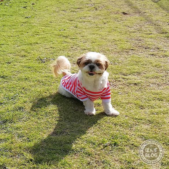 cainz_dogrun20181025_17