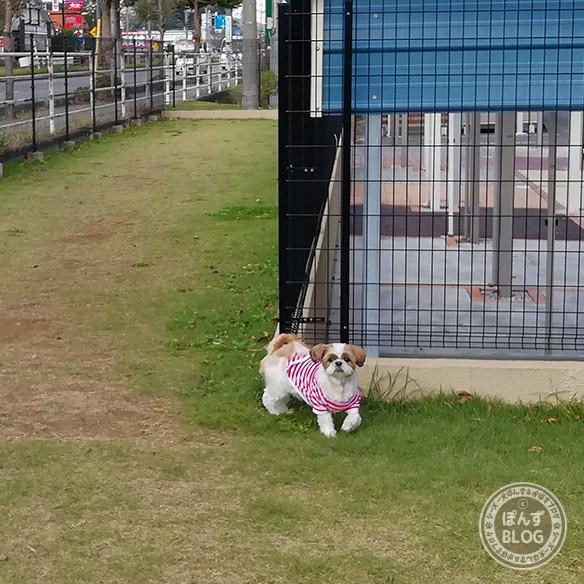 cainz_dogrun20181025_4