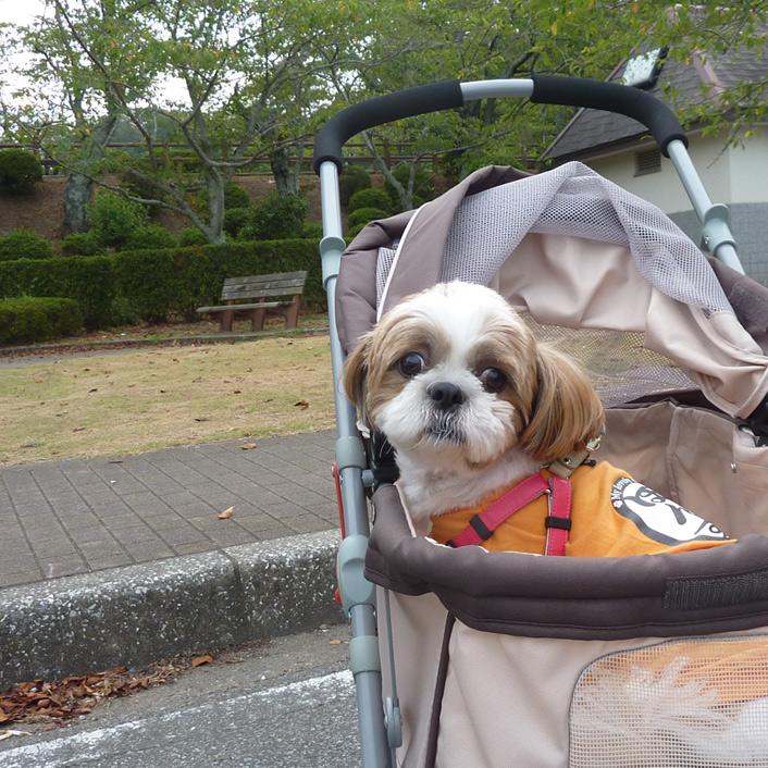カートに乗って、公園を散歩だよ。