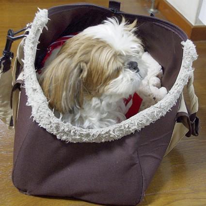 シーズー犬のキャリーバッグ