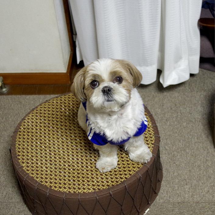 【名前・背番号入り】犬用サッカーユニフォーム日本代表!