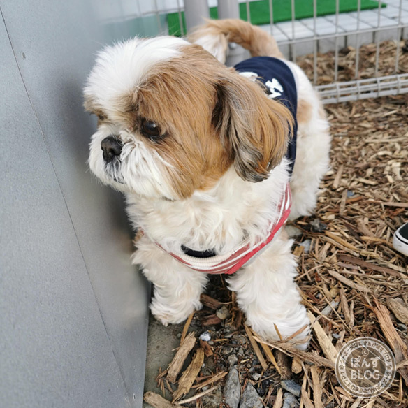 dogcafe20210418_13