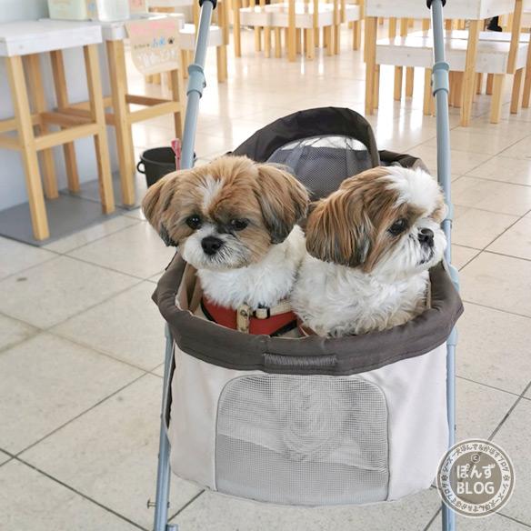 dogcafe20210418_15