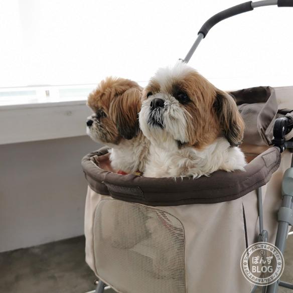 dogcafe20210418_6