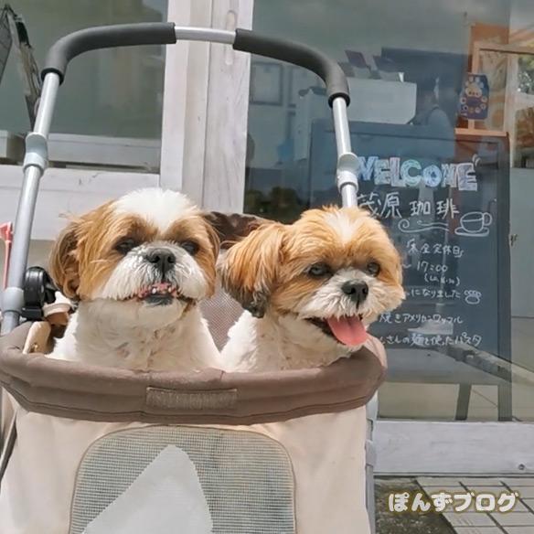 dogcafe_cofee