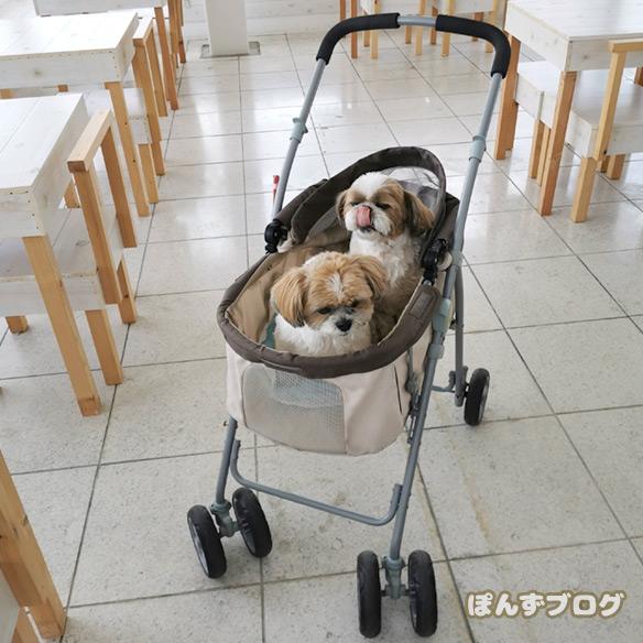 dogcafe_cofee2