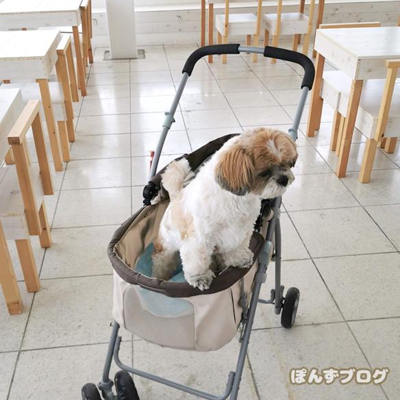 dogcafe_cofee4