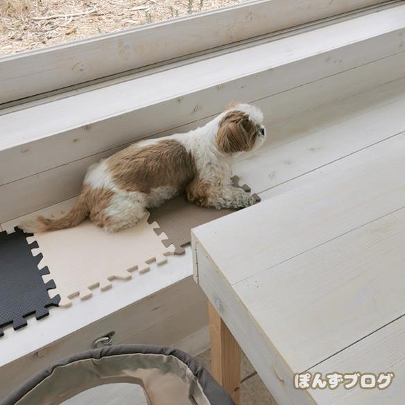 dogcafe_cofee6