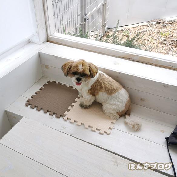 dogcafe_cofee7