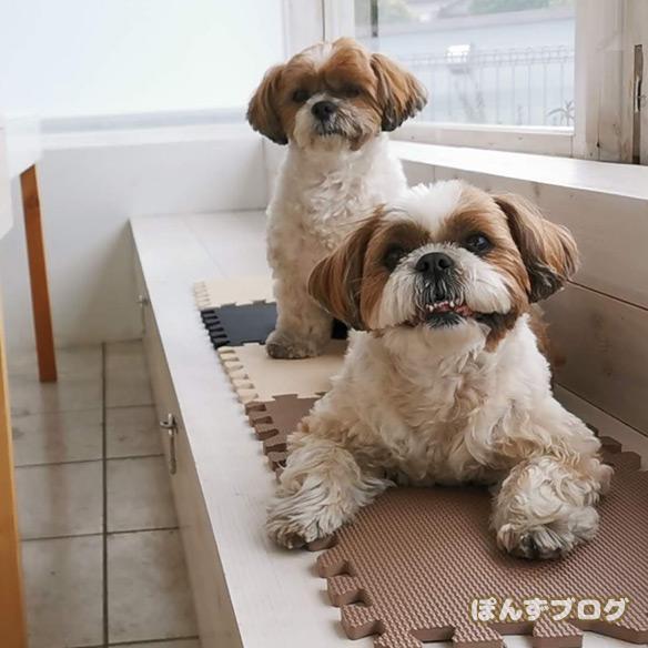 dogcafe_cofee9