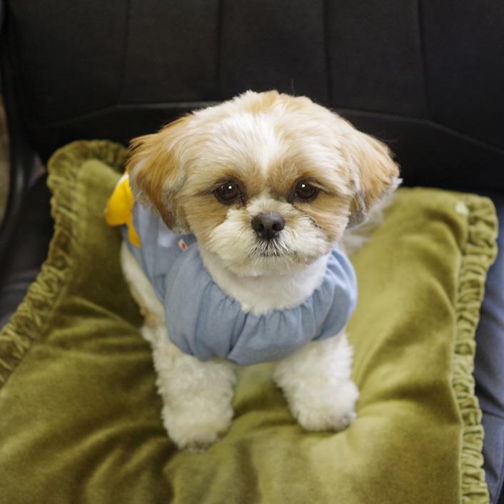 犬の幼稚園服、入荷です!