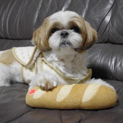 シーズー犬ぽんずのおもちゃ