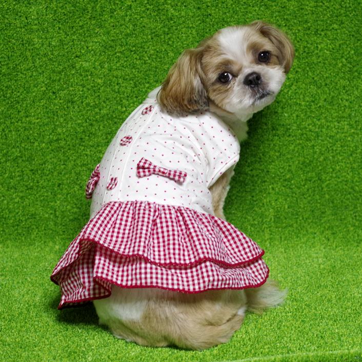涼しげな犬用ワンピースをご紹介!