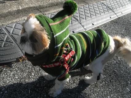 シーズー犬の服