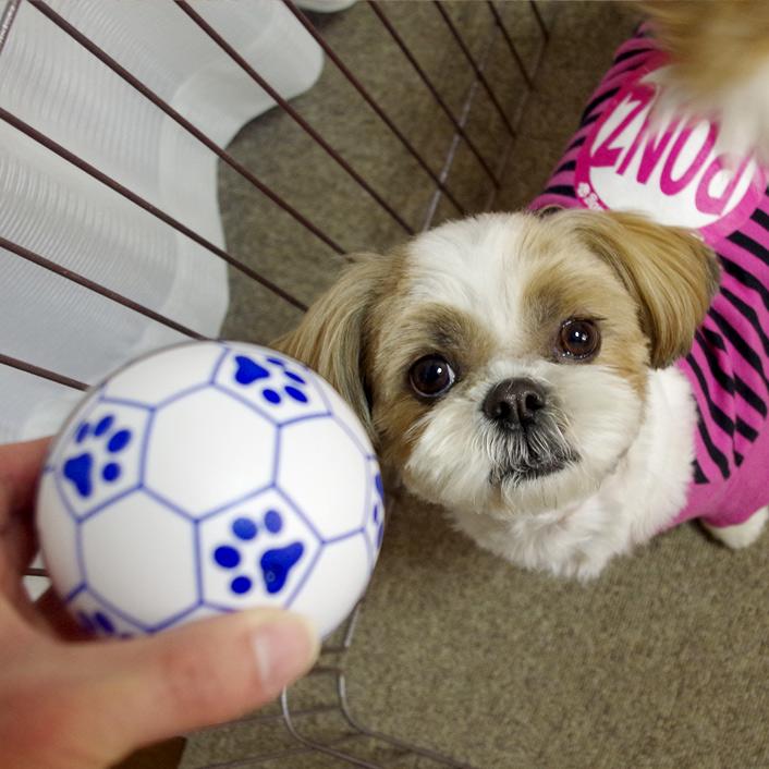 勝手に転がる不思議なボールふたたび!