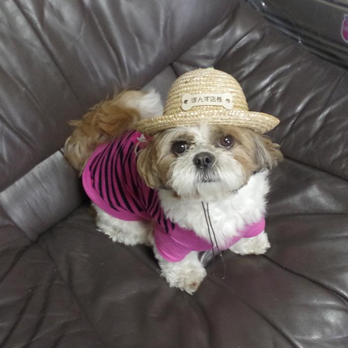 犬の麦わら帽子『ガーデンハット』販売再開です!
