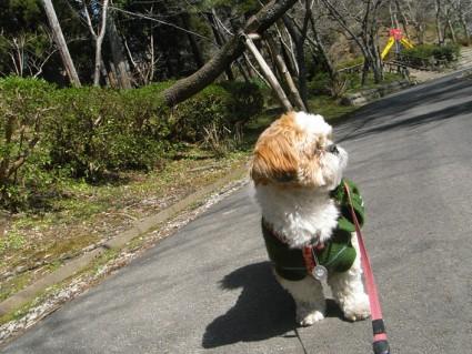 公園で散歩&風呂にも入れました