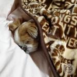 あんなにぐっすり寝てたのに。