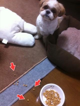 シーズー犬、ぽんずのご飯