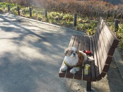 千葉県茂原市の『長生の森公園』
