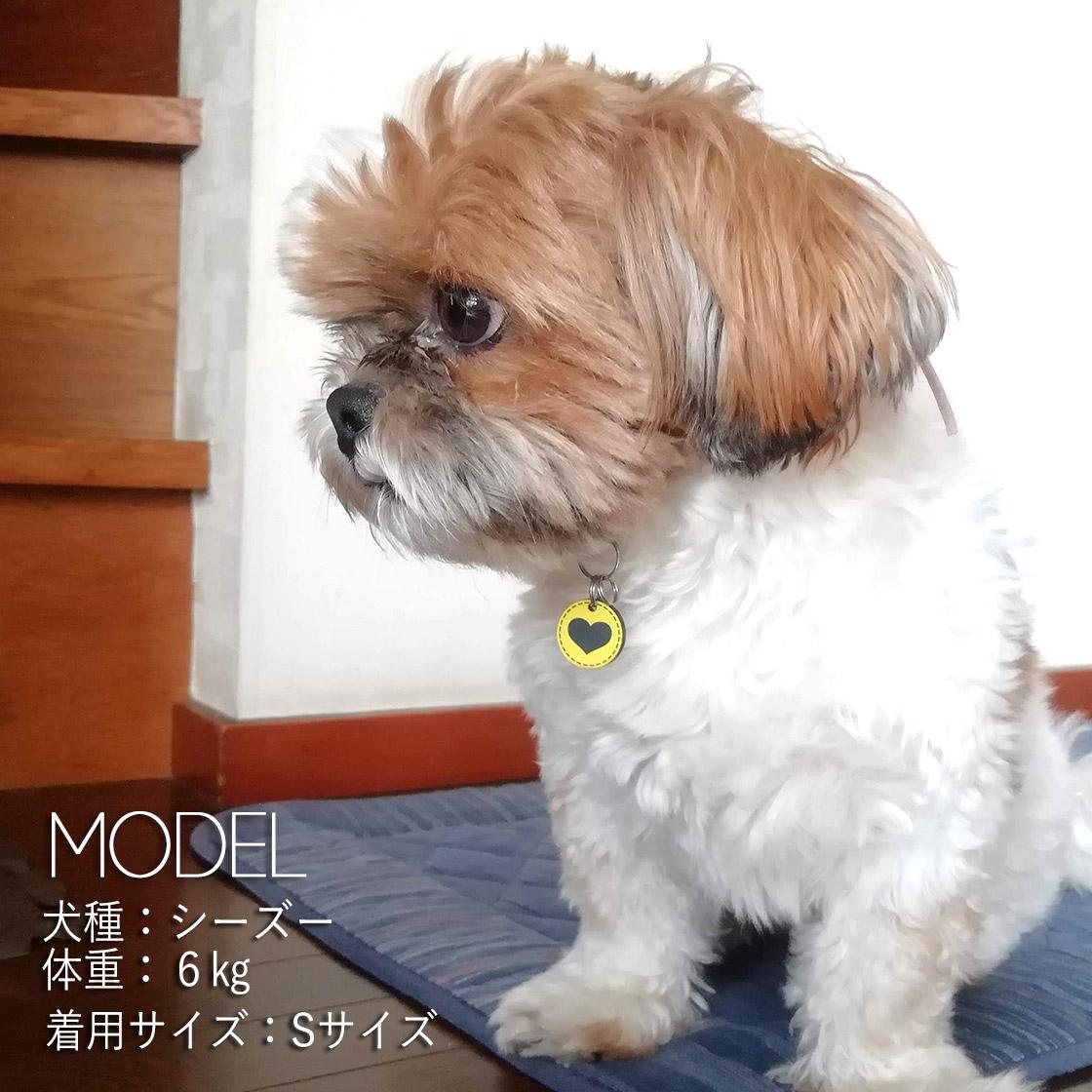 h_pettag_model