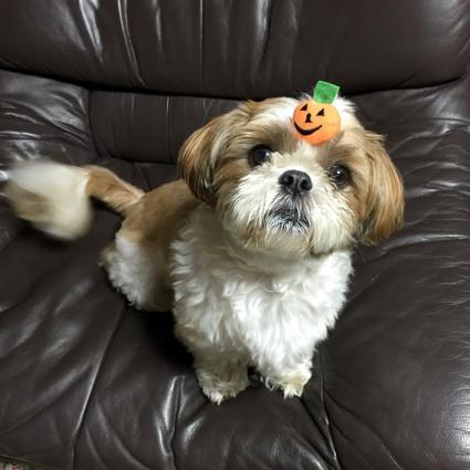 犬用ハロウィンキャンペーン