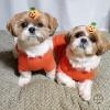 ささやかにかぼちゃ。