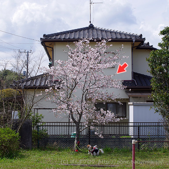 hanami20165