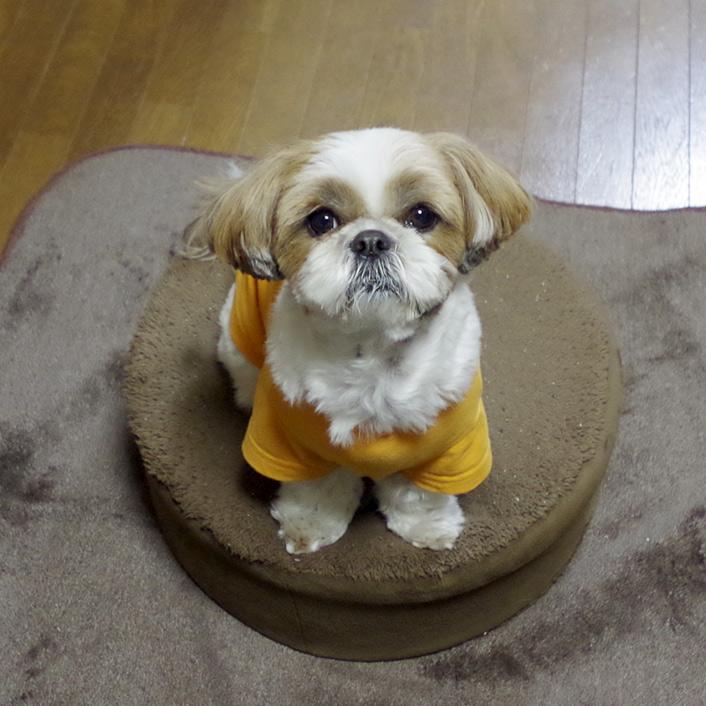 名前入り犬用Tシャツが登場!