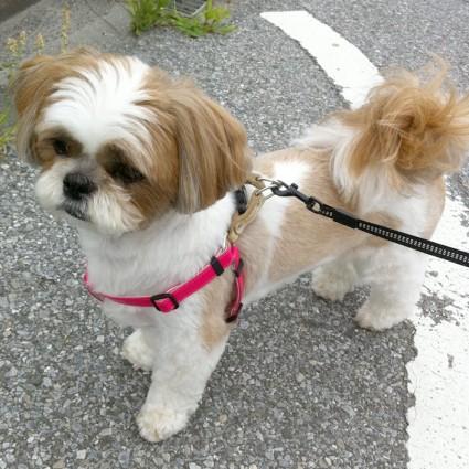 昼散歩、行ってきました!