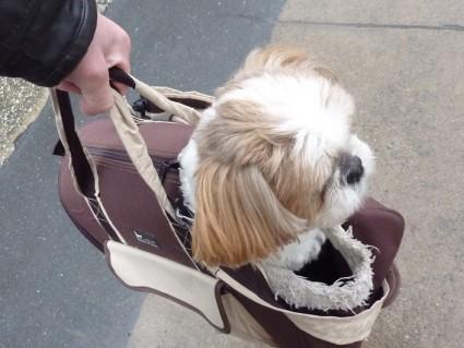 シーズー犬と買い物