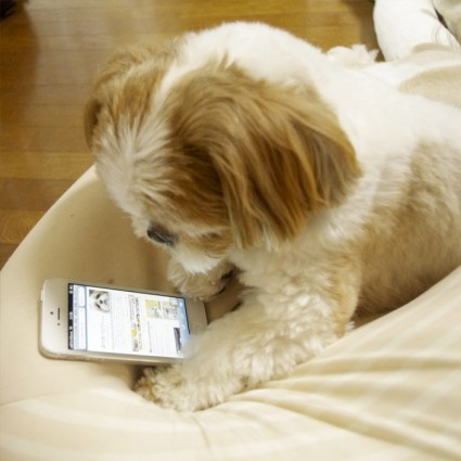 iPhone5がきたよ